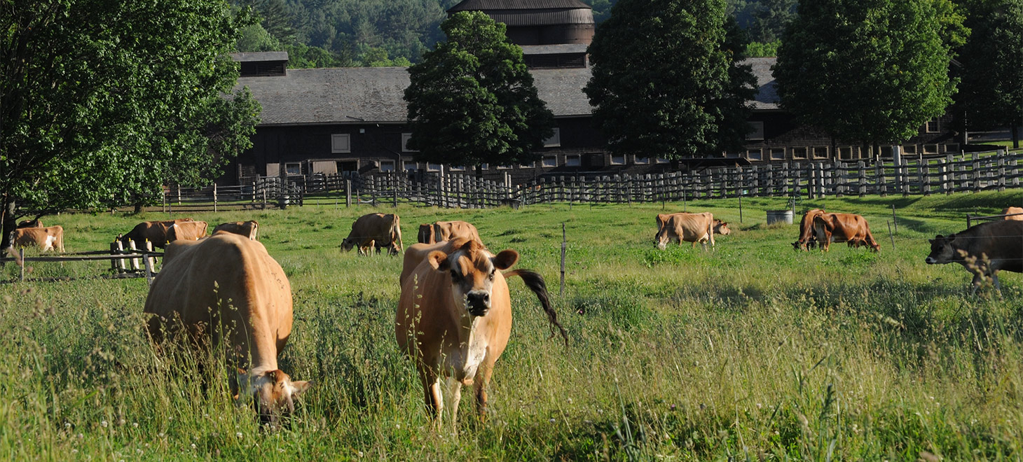 Billings Farm Tour