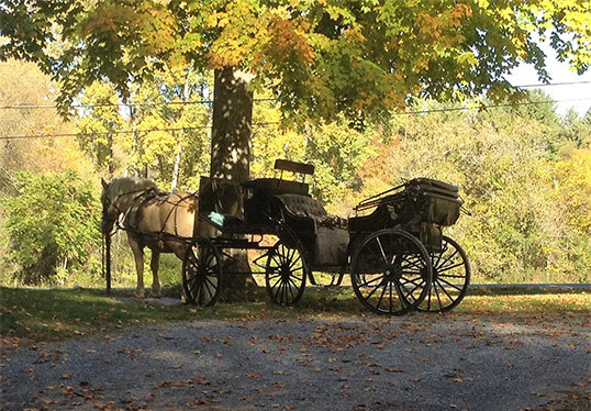 Livelys livery carriage rides in Bennington, VT