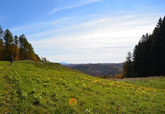 Vermont Pasture hiking